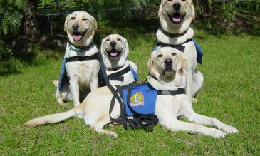 travelling with assistance dogs in usa