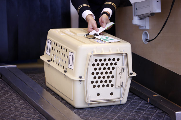 pet on the airplane