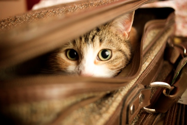Travelling to Europe with your Cat